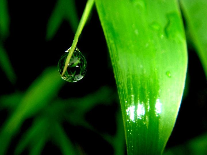 """Life as a Dew Drop"" by Dupz Escatron Ravelo"